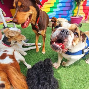 gallery-daycare-dogs-2