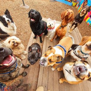 gallery-daycare-dogs-4