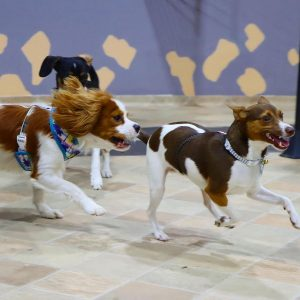 gallery-daycare-dogs-6