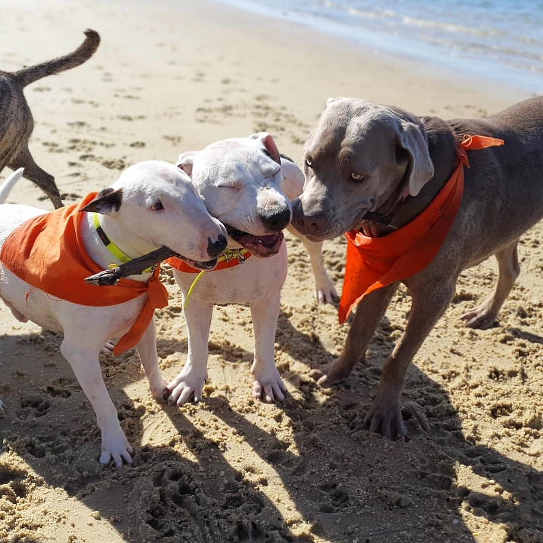 land-dogs-adventures-6